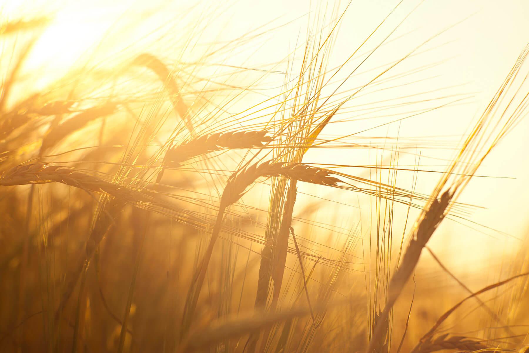 НИАР запускает обучение по вопросам оценки и подтверждения соответствия продукции органического производства